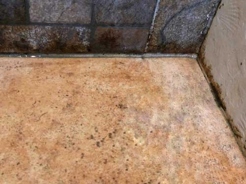 Mold Removal Charlotte