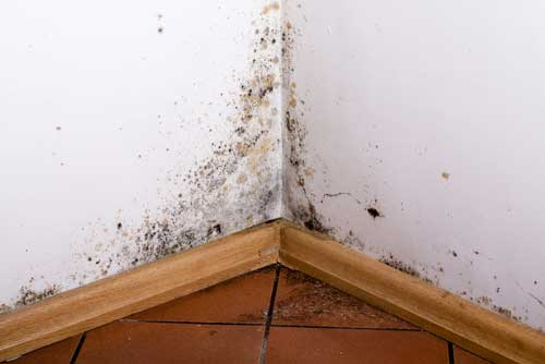 Mold Removal Mount Holly NC