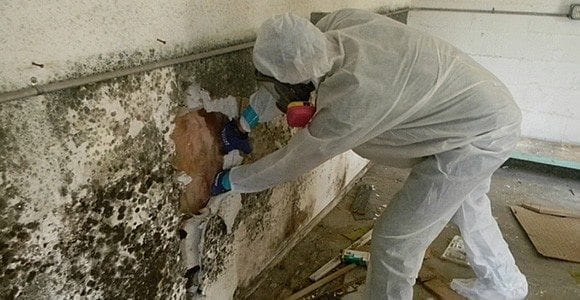 Mold Remediation in Charlotte