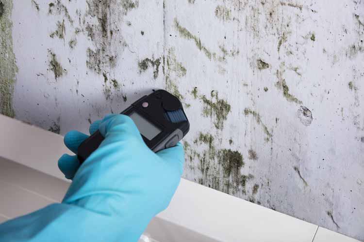 Mold Inspection, Testing Charlotte NC